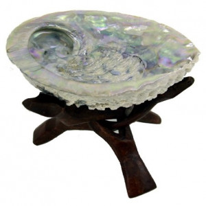 Abalone shell H. Midae + Cobra stand triangle Big