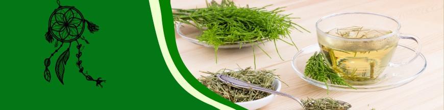Zioła i Herbaty